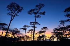 有日落的森林 库存照片