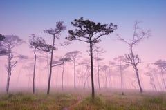 有日落的森林 免版税库存照片
