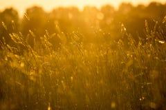 有日落的草甸 免版税库存照片