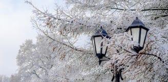有早午餐的街道灯笼在雪美好的冷的冬日 免版税库存照片