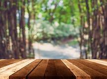 有早晨阳光的绿色竹森林 免版税库存图片
