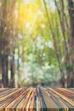 有早晨阳光的绿色竹森林 库存图片