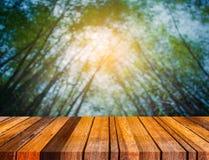 有早晨阳光的绿色竹森林 库存照片
