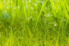 有早晨露水的绿色草坪 库存照片