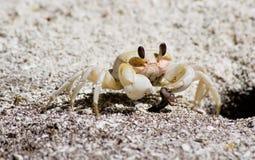 有早餐的螃蟹他的 图库摄影