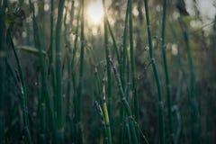 有旭日形首饰的绿色植物 免版税库存图片