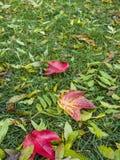 有明亮的秋天叶子的绿色草坪 库存图片