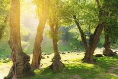 有明亮的阳光的自然森林早晨 库存照片