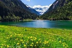 有明亮的黄色花的Mountain湖在前景 Stillup湖,奥地利,提洛尔 免版税库存图片
