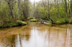 有春天的河 免版税库存照片