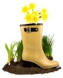 有春天的胶靴染黄花黄水仙、草和gro 免版税库存照片