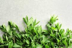 有春天绿色叶子的枝杈 免版税库存图片