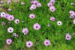 有春天花的草坪 免版税库存图片