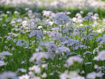 有春天花的草甸 免版税库存图片