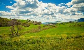 有春天花的绿色草甸 免版税图库摄影