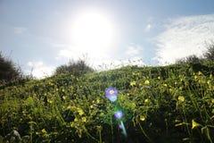 有春天阳光的小山 库存图片