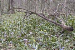 有春天年轻和美丽如画的下落的分支的森林沼地 免版税库存照片