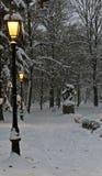 有晚上的冬天公园 免版税库存照片