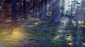 有月光的万圣夜神秘的森林 背景棒万圣节月光附注 可怕的地方在公墓在黑暗的森林里 免版税库存照片