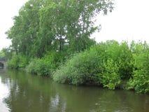 河岸和树 免版税库存图片