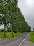有有些树的街道 免版税库存照片