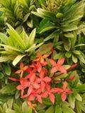 有有吸引力的花的多数人叶子 库存照片