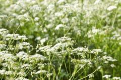 有有花的草甸 免版税库存图片
