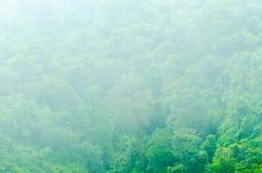 有有雾的绿色森林 免版税库存图片