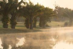 有有雾的高尔夫球场早晨 库存图片