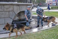 有服务狗的两警察在热期间的喷泉附近在城市 免版税库存图片