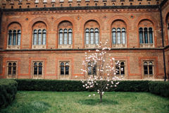 有木兰树的大学庭院 图库摄影