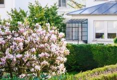 有木兰花树的法国庭院在绽放 免版税库存照片