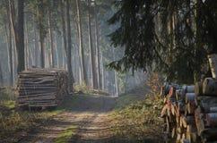 有木头的森林在路一边 库存照片