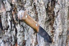 有木把柄的刀子 库存照片