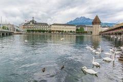 有木教堂桥梁和天鹅的卢赛恩瑞士 图库摄影