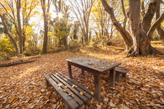 有木桌的野餐地方和长凳在秋天森林里 免版税库存图片
