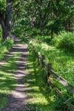 有木篱芭的土路 图库摄影