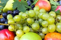 有机不同的新鲜水果 库存照片