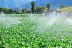 有机农厂新绿色菜浇灌 库存照片