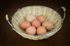 有机农厂新鲜的鸡蛋 图库摄影