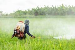 有机器和喷洒的化学制品的农夫对年轻绿色米fi 库存照片