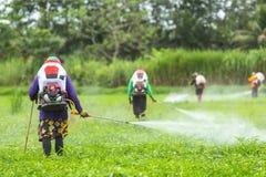 有机器和喷洒的化学制品的农夫对年轻绿色米fi 免版税库存照片