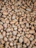 有机土豆 免版税库存照片