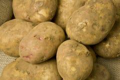 有机土豆 免版税库存图片