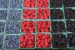 有机增长的浆果新鲜 免版税库存照片