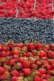 有机增长的浆果新鲜 库存图片