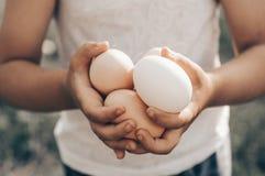 有机小女孩藏品和采摘好的卵品质和给在农场的眼睛带来 健康的食物 复活节 图库摄影