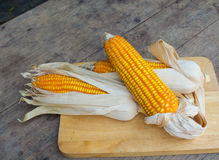 有机干棕色玉米 图库摄影