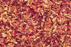 有机干燥锦缎玫瑰花瓣(罗莎damascena)在茶削减了大小 库存图片