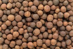有机干错误黑胡椒& x28; Embelia Ribes& x29; 图库摄影